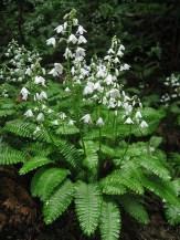 Elegant White Plants Garden Design Ideas For You 30