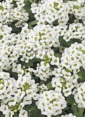 Elegant White Plants Garden Design Ideas For You 33