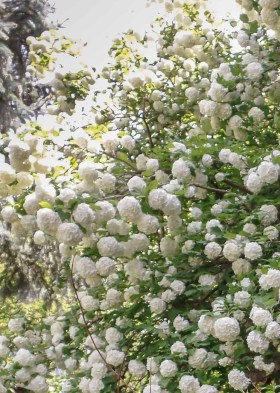 Elegant White Plants Garden Design Ideas For You 36
