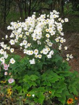 Elegant White Plants Garden Design Ideas For You 37