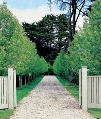 Fabulous Driveway Landscaping Design Ideas For Your Home To Try Asap 15