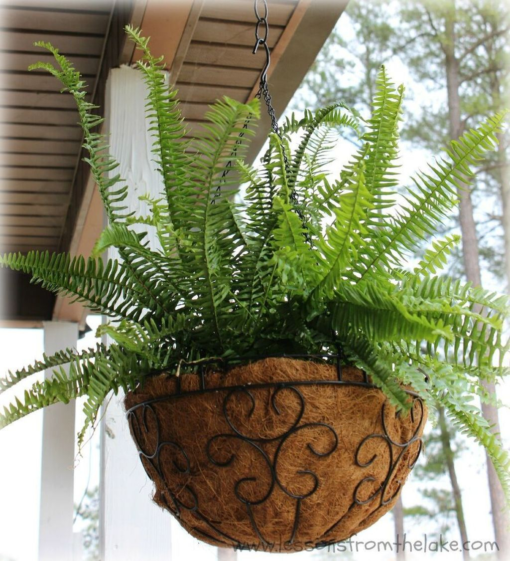 Favorite Home Patio Design Ideas With Best Hanging Plants 22