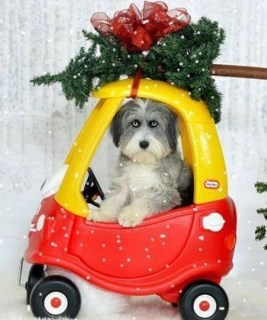Casual Winter Decorating Ideas For Pet Lovers To Try Right Now 11
