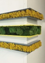 Delicate Natural Moss Wall Art Decorations Ideas To Try Right Now 01