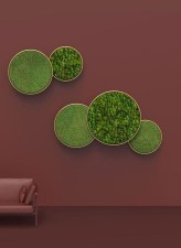 Delicate Natural Moss Wall Art Decorations Ideas To Try Right Now 11