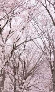 Sophisticated Pink Winter Tree Design Ideas That Looks So Cute 31