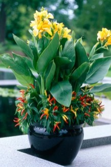 Luxury Container Garden Design Ideas For Your Landscaping Design 03