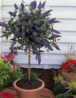 Luxury Container Garden Design Ideas For Your Landscaping Design 31