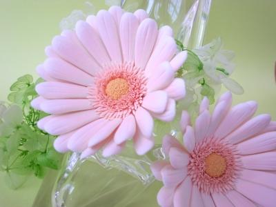 モコモコふんわり桃色クレイガーベラ