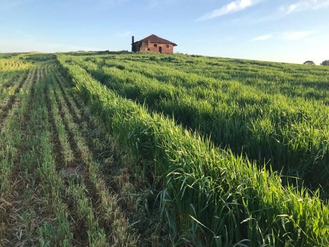 Farm house on a hill