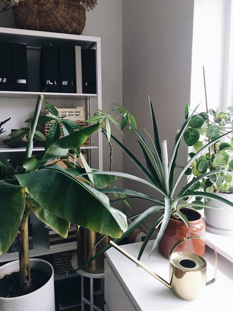 Et vandingstip til dine planter
