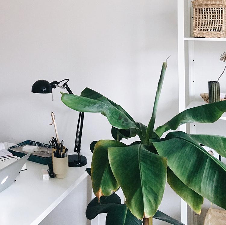 Gratis ebog om planter