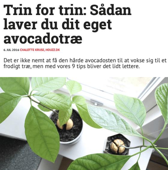 Sådan laver du din egen avocadotræ