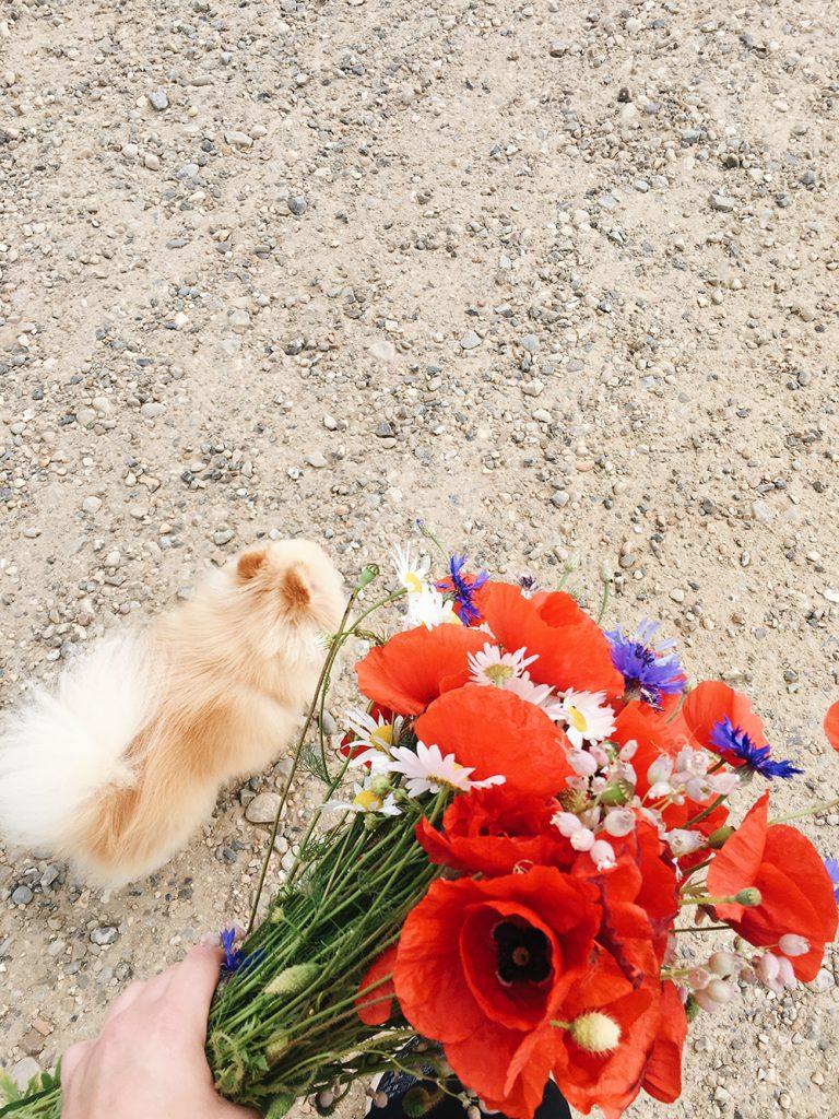 Vilde blomster - valmuer