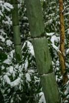 Matsue Japon shimane hiver neige chateau bambou