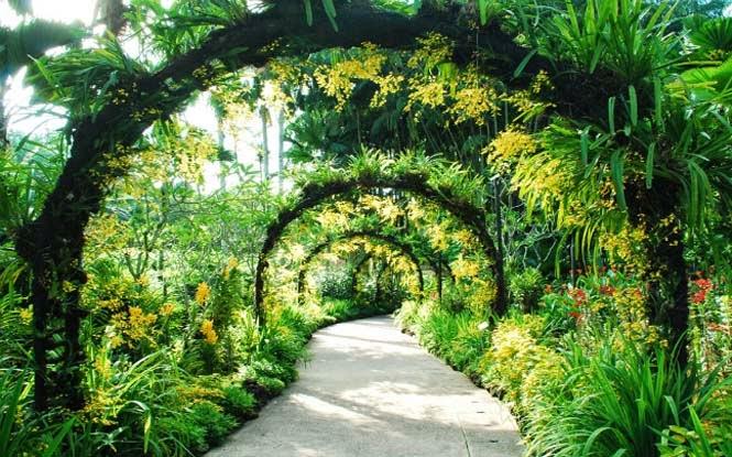 Cursos gratis de botanica