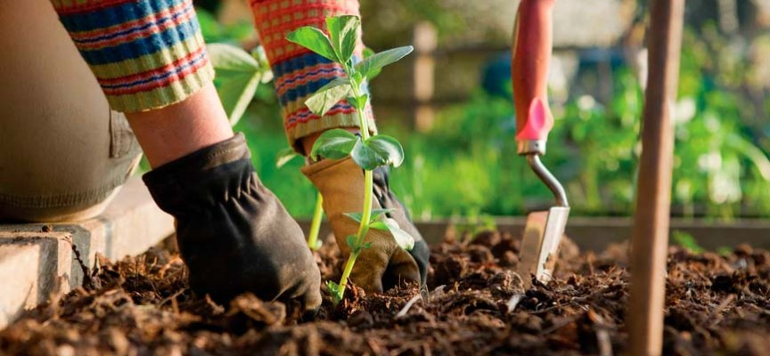 Cursos gratis de jardineria la formaci n para hacer o for Formacion jardineria