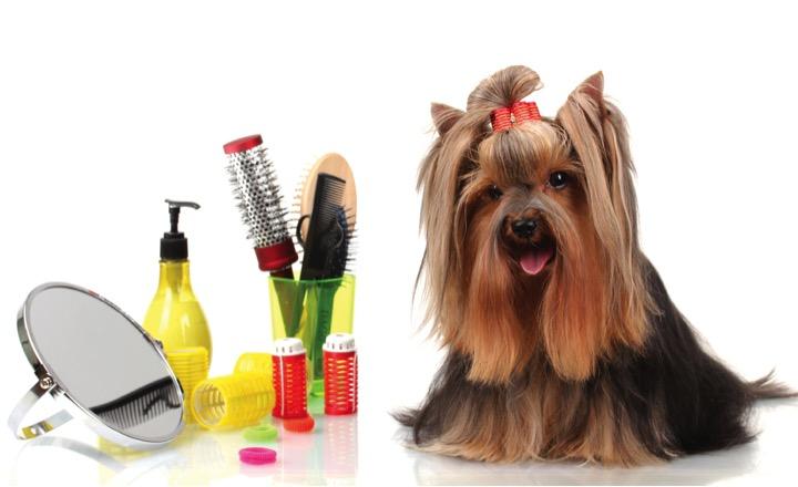 cursos gratis de peluqueria canina