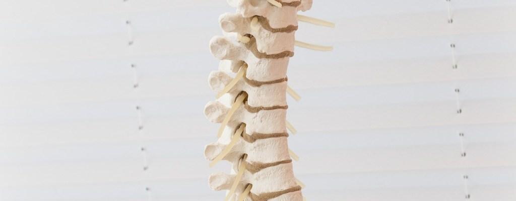 Cursos de quiropractica gratis