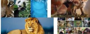 cursos gratis de animales
