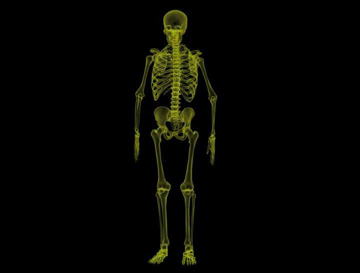 gambar-sistem-rangka-tubuh