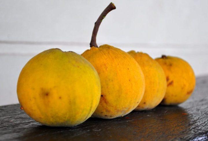 gambar buah kecapi