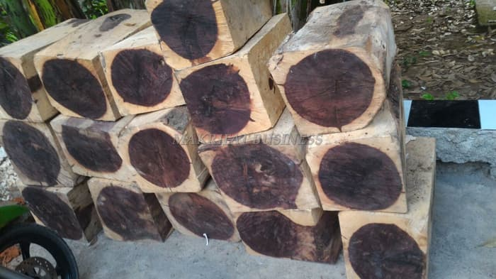 kayu galih asem