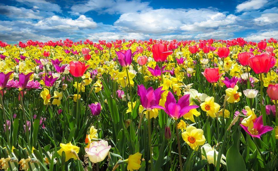 101 Nama Nama Bunga Indah Dan Langka Penjelasan Gambar