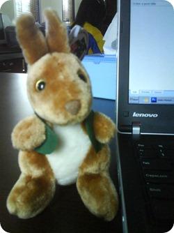 dsc06747 - Why Kangaroo Jumping?