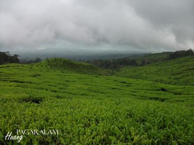 wpid dscf94271 - Koleksi Foto Alam di Pagaralam