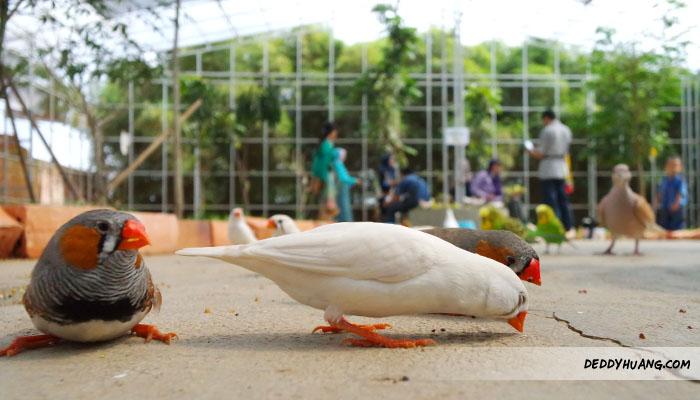 bird06 - Santai Pegang Burung di Palembang Bird Park