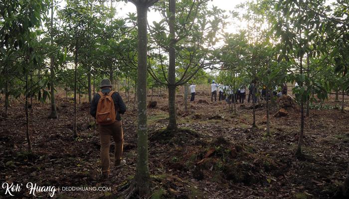 area hutan gambut - Restorasi Hutan Gambut Sepucuk Siap Curi Perhatian Dunia