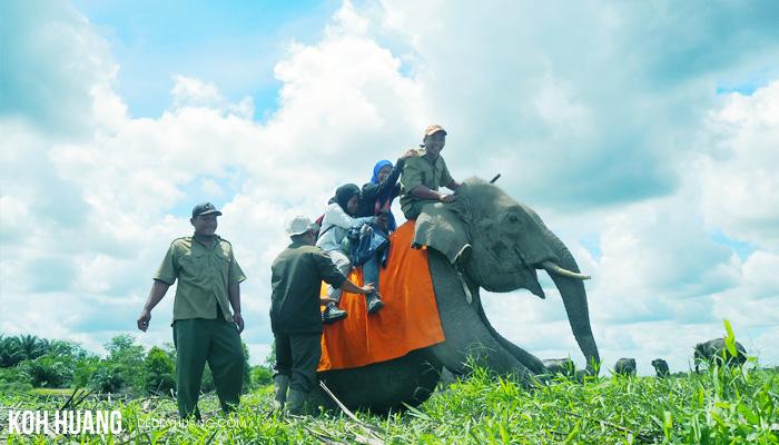 spesies gajah pintar