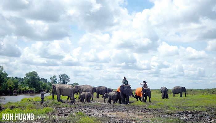 lingkungan gajah sehat