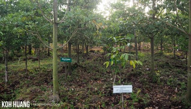 kebun plasma nutfah kayu agung 2 - Karena Gambut Kita Bertemu Senja