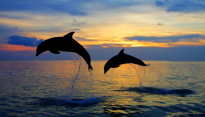 pantai lovina lumba lumba - Aku Patah Hati! Bali, Tolong Sembuhkan Aku