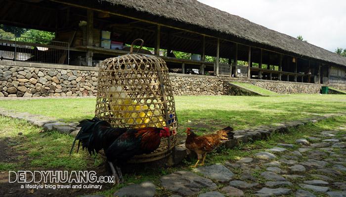 desa tenganan 07 - Karangasem, The Spirit of Bali