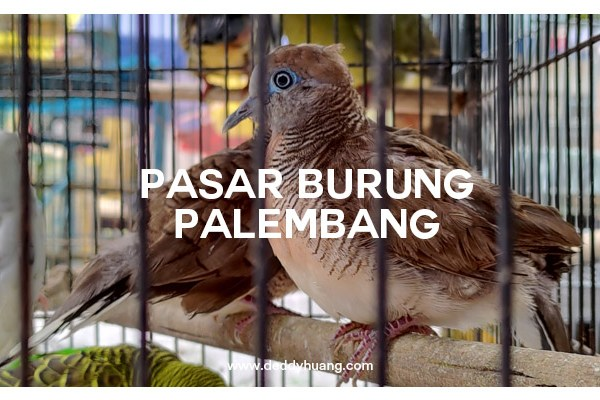 Geliat Wajah Pasar Burung Palembang