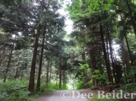 Stanley Park hiking trail