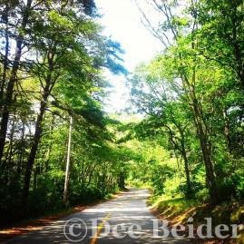 Cape Cod backroads