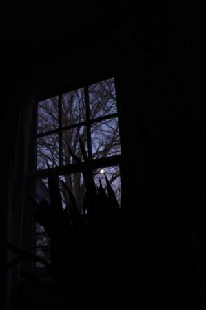 view-from-bed