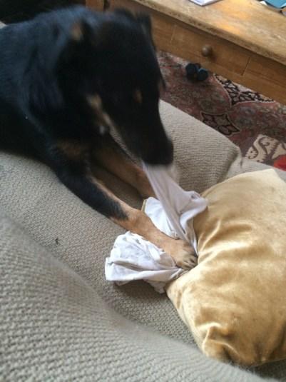 puppy-chew-deemallon
