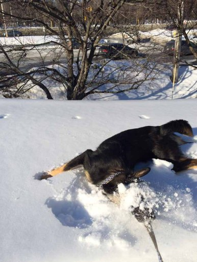 puppy-snow-deemallon
