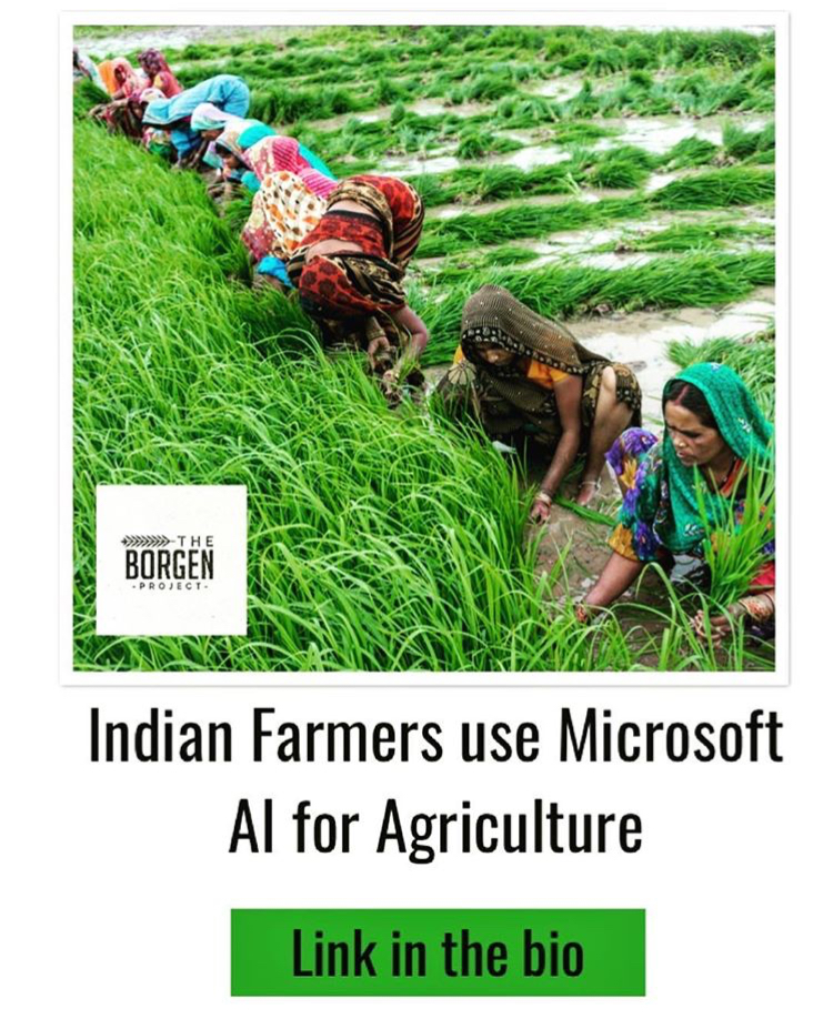 Indian Farmers Use AI to Increase Crop Yields