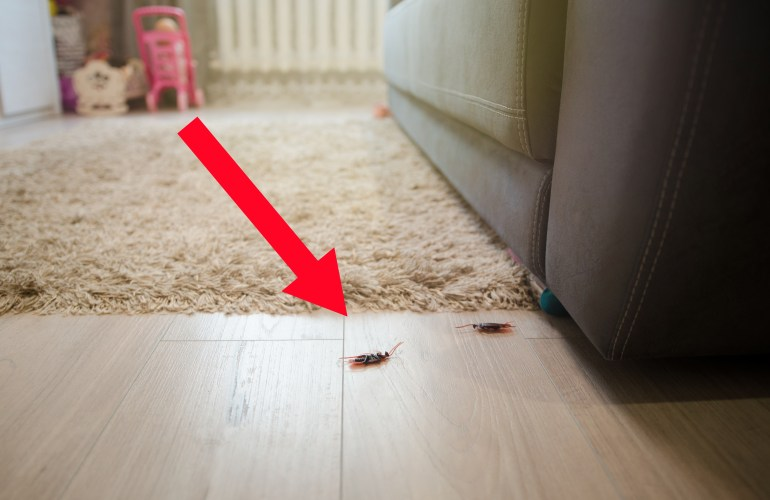 Would you let roaches live in your home?