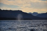 Humpback Whale Blow And Companions Back in British Columbia