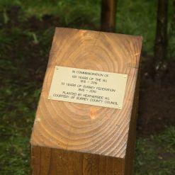 WI Tree Planting - Alan Meeks 6