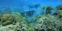 Buceo de diversión en el arrecife de coral en el Caribe, México