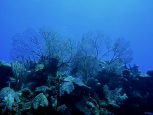 Coral reef in the Caribbean reef - Mexico