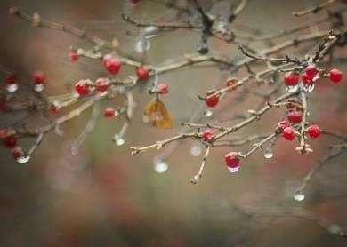 Rainy Weather Berries